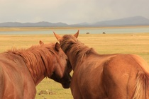 Horses on Son-Kul lake