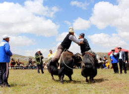 Yak & National Horse Games Festival